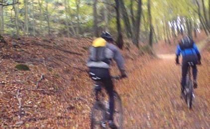 Cykling i höstfärgad bokskog