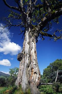 sistatree